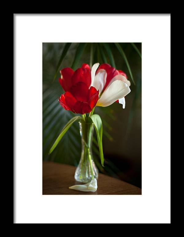 Tulip Framed Print featuring the photograph Simple Beauty by Mike Reid