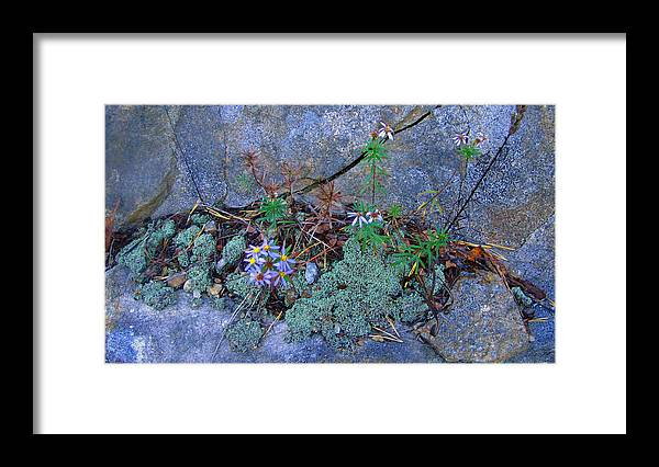 Grey Framed Print featuring the photograph Simplicity by Elisia Cosentino