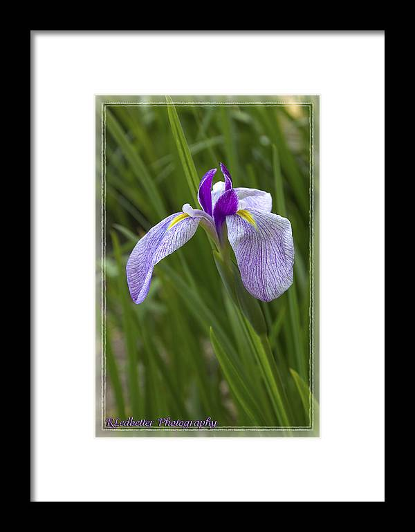 Flowers Framed Print featuring the photograph Simply Elegant by Renee Ledbetter