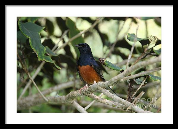 Bird Framed Print featuring the photograph Sing To Me by Bruce Borthwick
