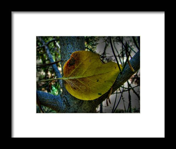 Bradshaw Mountains Framed Print featuring the photograph Single Cottonwood Leaf by Aaron Burrows