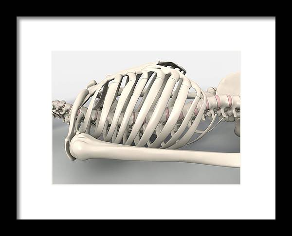 Skeleton Framed Print featuring the photograph Skeleton's Torso, Artwork by David Mack