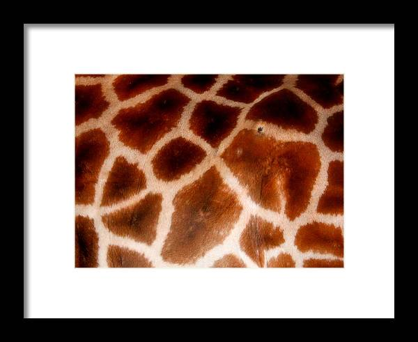 Giraffe Framed Print featuring the photograph Skin Deep by Sonja Bonitto