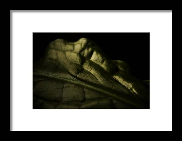 Skunk Cabbage Framed Print featuring the photograph Skunk Cabbage Leaf by Bonnie Bruno