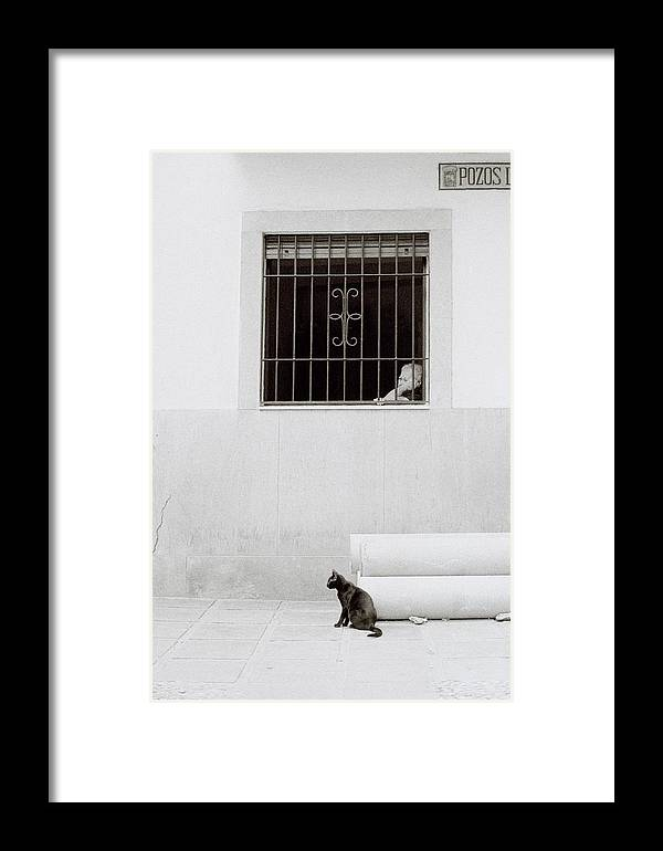 Cat Framed Print featuring the photograph A Sleepy Afternoon by Shaun Higson