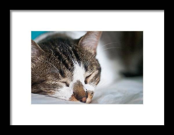 Cat Framed Print featuring the photograph Sleepy Cat by Adrianne Meyer-Gruhl