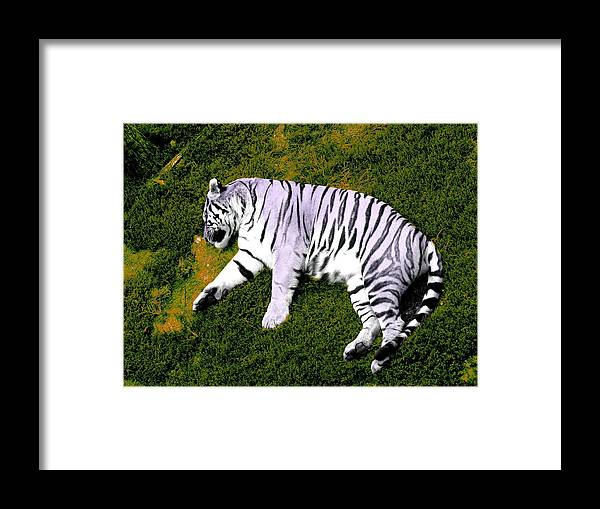 Tiger Framed Print featuring the photograph Sleepy Tiger 2 by Brandy Lacey
