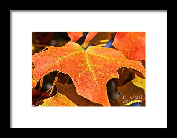 Outdoors Framed Print featuring the photograph Sm Leaf by Susan Herber