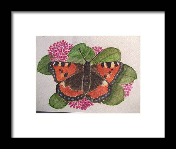 Butterfly Framed Print featuring the drawing Small Tortoiseshell Butterfly by Mark Dermody