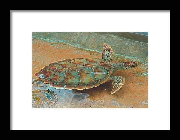 Sea Turtle Framed Print featuring the photograph Small Wake by Stacey Robinson