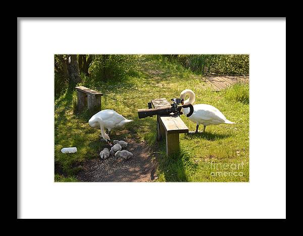 Swans Framed Print featuring the photograph Smile You Lot by Doug Thwaites