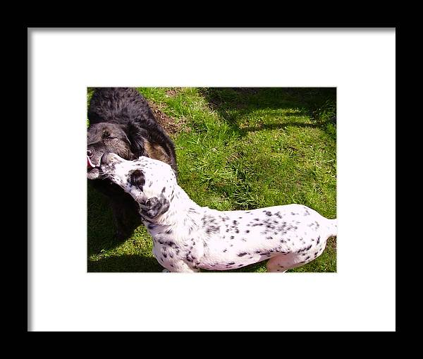 Dog Framed Print featuring the photograph Smooches by Naomi Rogers