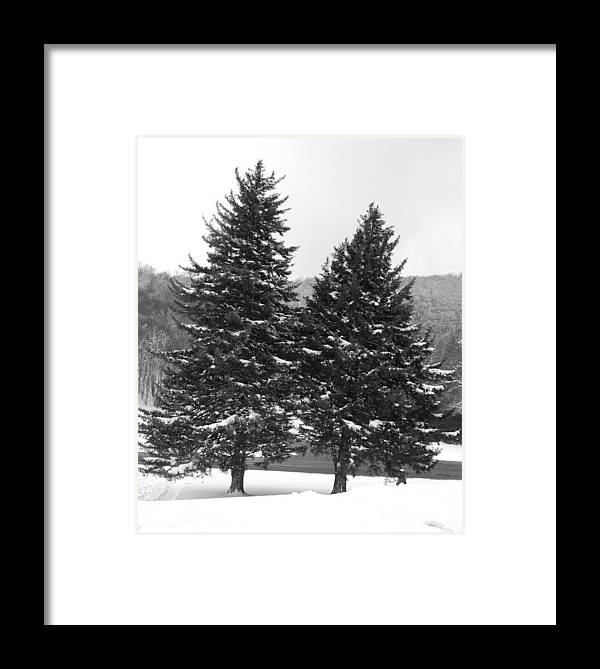 Chrostmas Trees Framed Print featuring the photograph Snow Covered Trees by Carrie Munoz