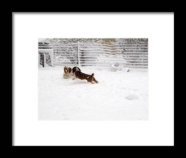 Animals Framed Print featuring the photograph Snow Day Play by Debbie Portwood