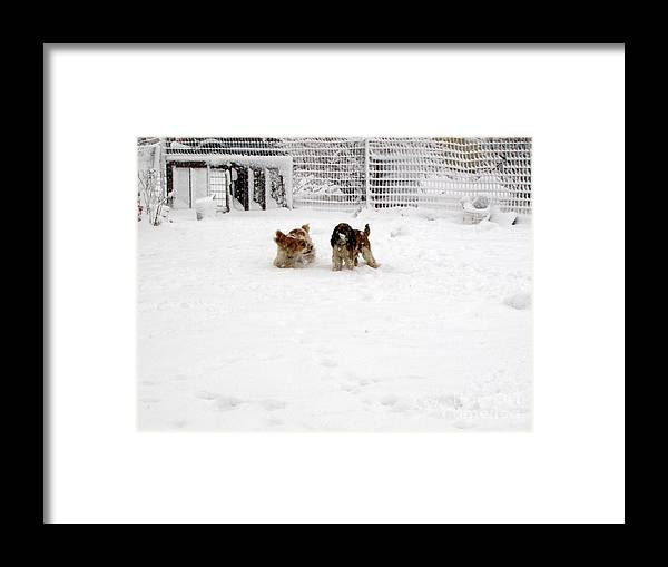 Animals Framed Print featuring the photograph Snow Day Play II by Debbie Portwood