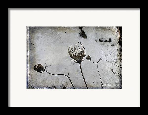 Snow Seeds Framed Print featuring the photograph Snow Seeds by Paul Grand