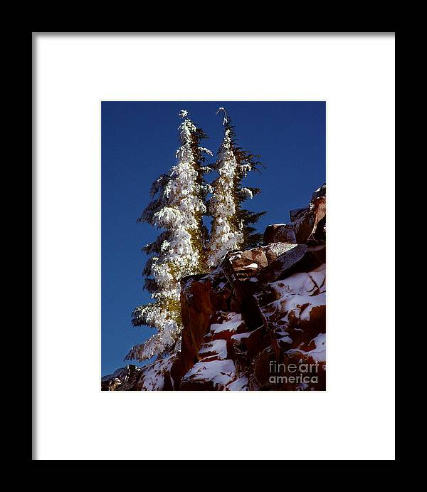 Snow Tipped Trees Framed Print featuring the photograph Snow Tipped Trees by Peter Piatt