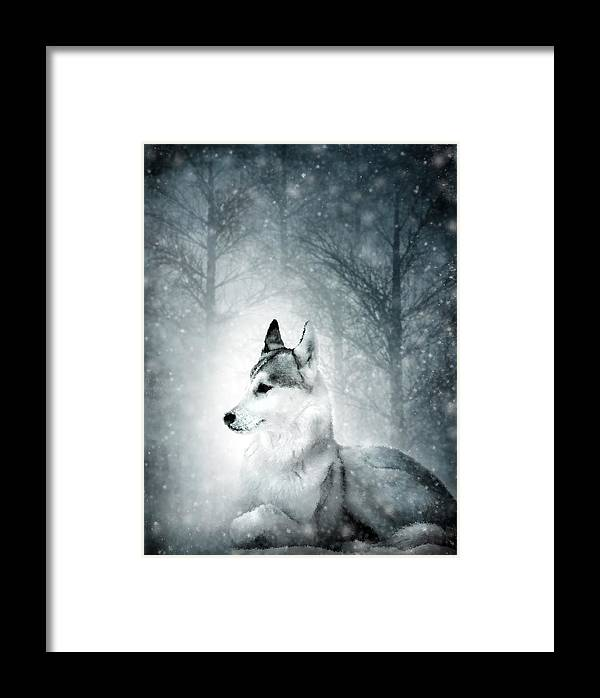 Animal Framed Print featuring the digital art Snow Wolf by Svetlana Sewell