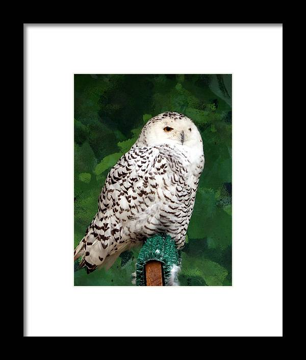 Snowy Owl Framed Print featuring the photograph Snowy Owl by Travis Abe-Thomas