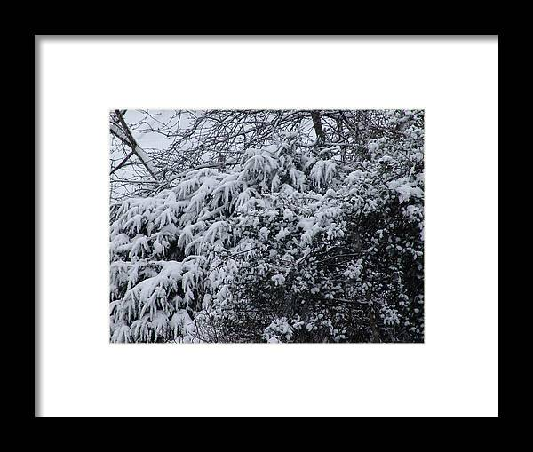 Snow Framed Print featuring the photograph Snowy Winter Branches by Ashok Patel