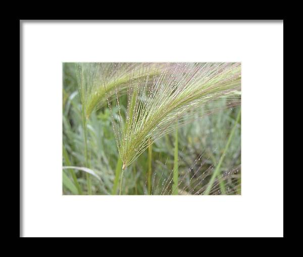 Grass Framed Print featuring the photograph Soft Rain On Grass by Ramie Liddle