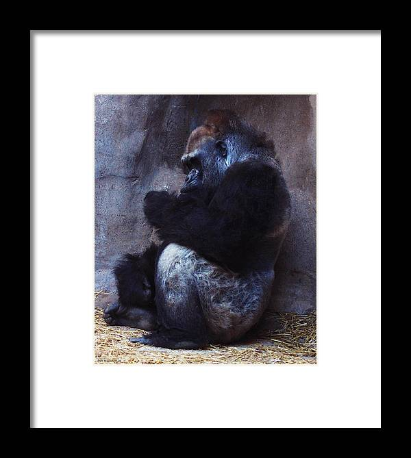Gorilla Framed Print featuring the photograph Something To Do by DiDi Higginbotham