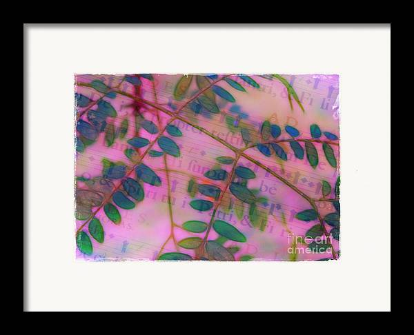 Song Framed Print featuring the photograph Song Of The Honey Locust by Judi Bagwell