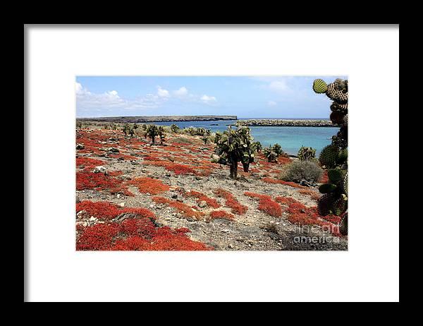 Ecuador Framed Print featuring the photograph South Plaza Island by Fabian Romero Davila