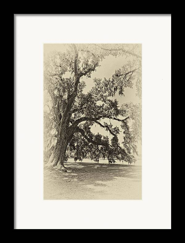 Evergreen Plantation Framed Print featuring the photograph Southern Comfort Sepia by Steve Harrington