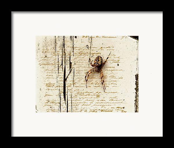Spider Framed Print featuring the photograph Spider Letter by Yvon van der Wijk