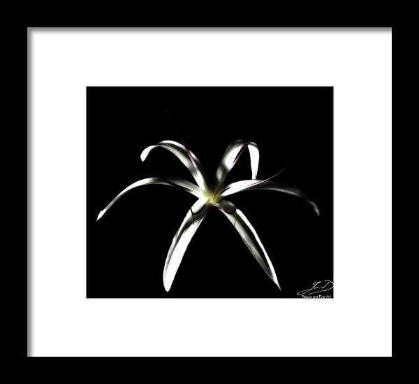 Crinum Asiaticum Framed Print featuring the photograph Spider Lily by Ian Dean