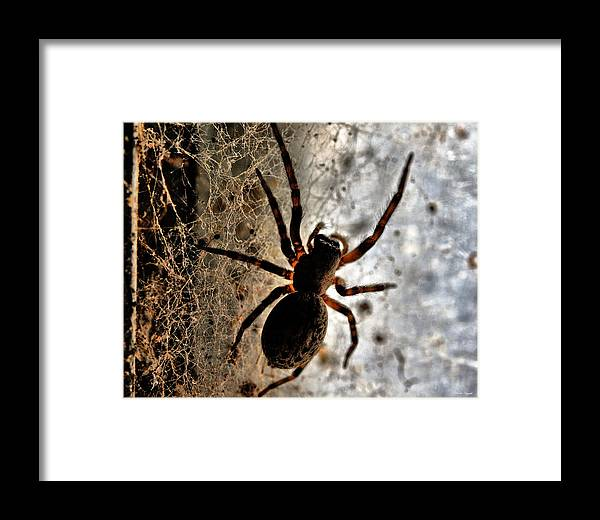Spider Framed Print featuring the photograph Spiders Home by Chriss Pagani