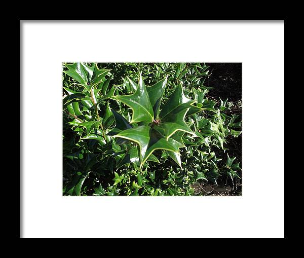 Plant Framed Print featuring the photograph Spikey by Rani De Leeuw
