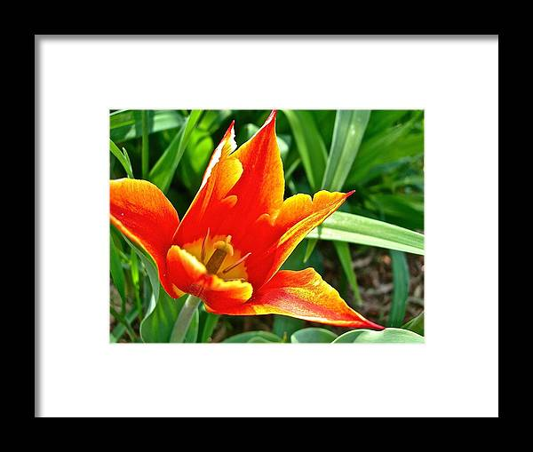 Flowers Framed Print featuring the photograph Splendor of Spring by Randy Rosenberger