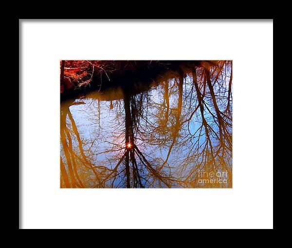 Nature Framed Print featuring the photograph Spot Light by Rrrose Pix