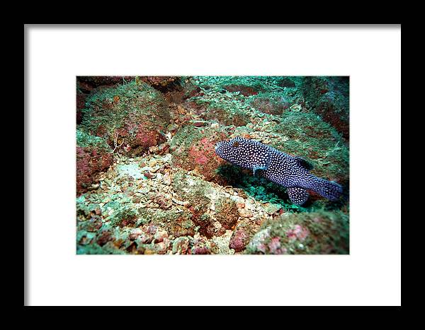 Framed Print featuring the photograph Spot by Richard Morris