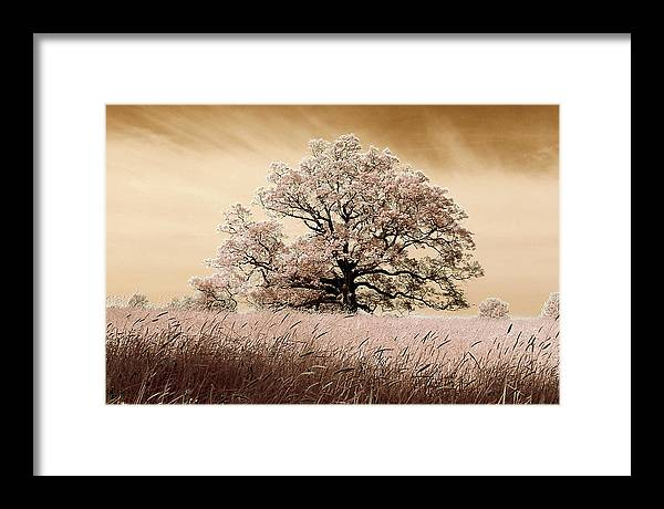 Trees Framed Print featuring the photograph Spring Breeze by Stephen Pacello