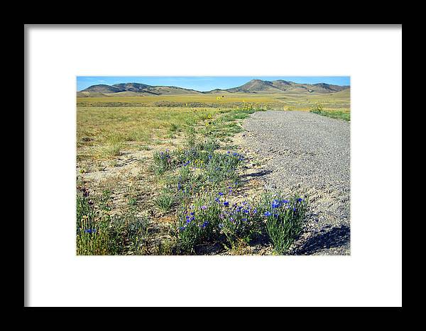 Tranquility Photographs Framed Print featuring the photograph Spring Flowers by C Sitton