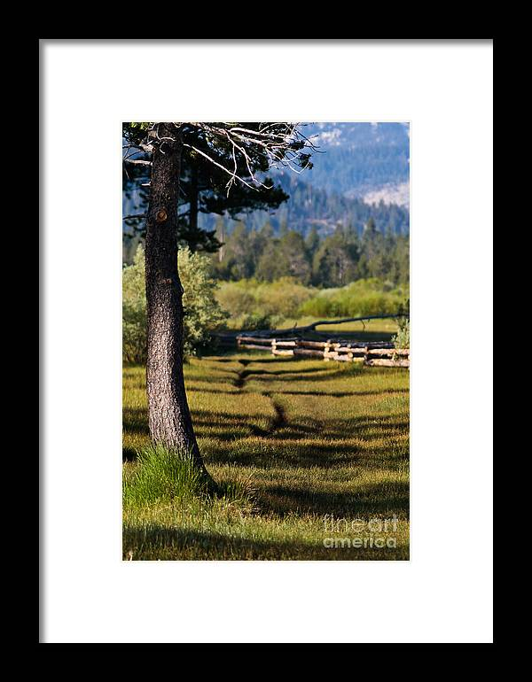 Spring Green Framed Print featuring the photograph Spring Green by Mitch Shindelbower
