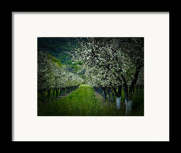 Spring Framed Print featuring the photograph Springtime In The Orchard II by Bill Gallagher