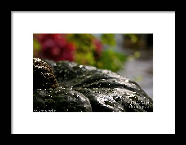 Outdoors Framed Print featuring the photograph Squash Showered by Susan Herber