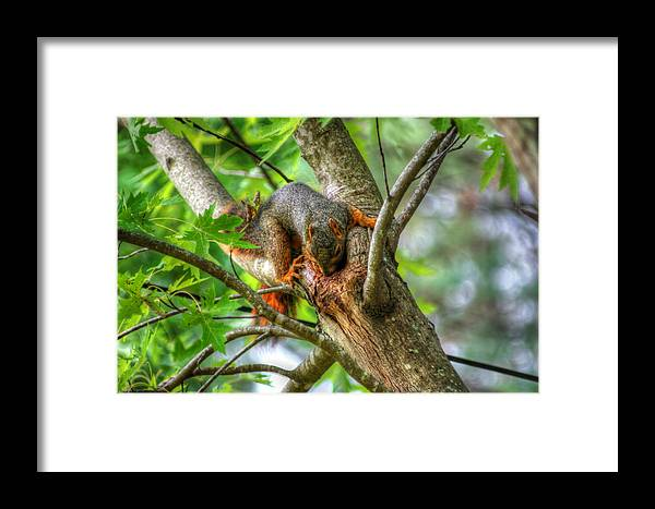 Squirrel Prints Framed Print featuring the photograph Squirrel by Ester Rogers