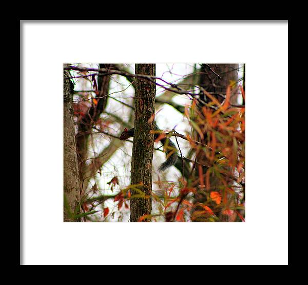 Squirrel Framed Print featuring the photograph Squirrel by Jake Busby