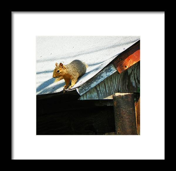 Expressive Framed Print featuring the photograph Squirrel On A Hot Tin Roof by Lenore Senior