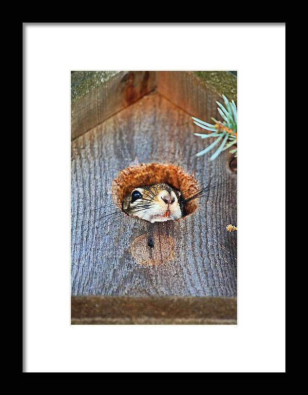 Framed Print featuring the photograph Squirrely by Ryan and Karin Keranen