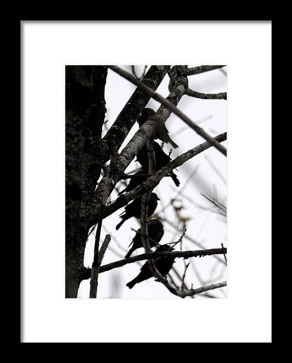 Black Birds Framed Print featuring the photograph Stacked by Wanda Brandon