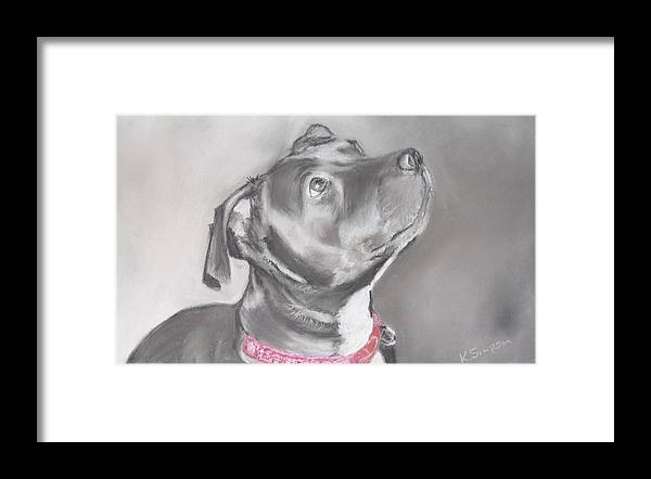 Dog Framed Print featuring the drawing Staffordshire Terrier by Karl Simpson