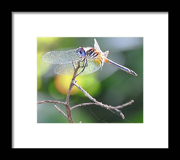 Dragonfly Framed Print featuring the photograph Stained Glass Inspiration feminine by Christine Stonebridge