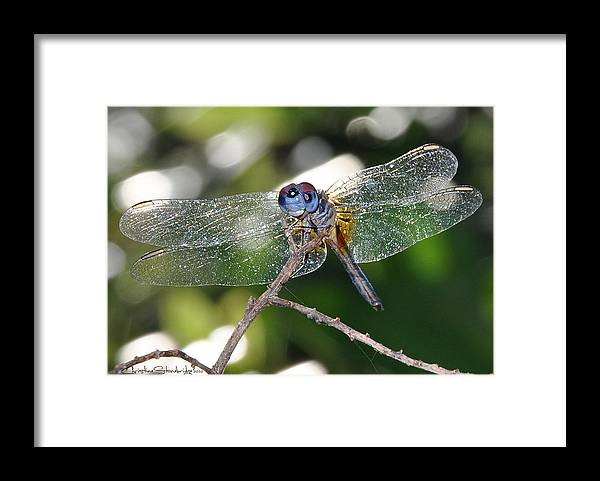 Dragonfly Framed Print featuring the photograph Stained Glass Inspiration masculine by Christine Stonebridge