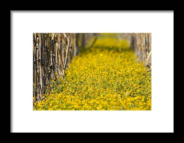 Yellow Framed Print featuring the photograph Stalks And Sunshine by Karen Wagner